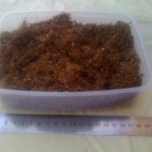 טבק במשקל | טבק בסיטונאות | חוזק בינוני 1 קילוגרם