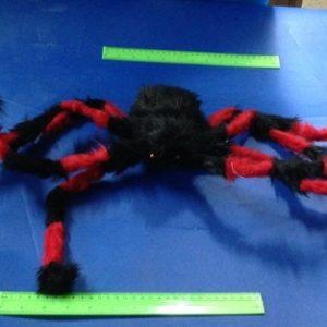 עכביש טרנטולה ענק